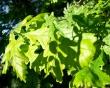 Photosynthesis Tool - summer wallpaper