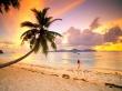Palm Beach - scenery wallpaper