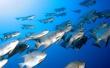 Fish Tank - fish wallpaper