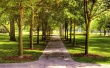 A shiny day in park - scenery wallpaper