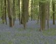 Dense forest - scenery wallpaper