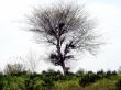 Tree - scenery wallpaper