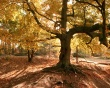 Old tree in autumn - scenery wallpaper