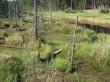 Forest Vegetation - scenery wallpaper