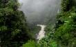 Jungle - scenery wallpaper