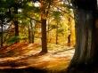 Brown Forest - summer wallpaper