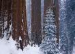 Winter Lyoopod - scenery wallpaper