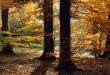 Light Forest - scenery wallpaper