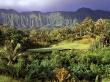 Palm Tree - scenery wallpaper