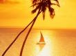 Sunset Sailing - scenery wallpaper