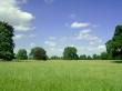 Lollitree Landscape - summer wallpaper
