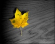 Autumn Leaves Wallpaper Preview