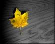 Autumn Leaves - autumn wallpaper