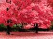 Autumn Fantasy - autumn wallpaper