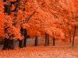 Fresh Squeezd - autumn wallpaper