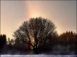 Rainbow Tree - winter wallpaper