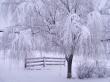 Winter Ecstasy - winter wallpaper