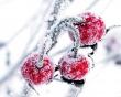 Winter Fruits - winter wallpaper