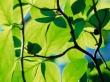 Longhorn leaf - other wallpaper