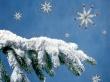 Fir Tree Arm - christmas wallpaper