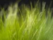Vista grass - other wallpaper