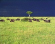 Savannah Storm - africa wallpaper