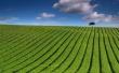 Green Striped Field - scenery wallpaper