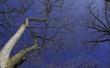 Crown in Blue - scenery wallpaper