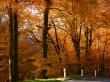 Golden Forest - scenery wallpaper