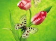 Tulip Butterfly - insects wallpaper