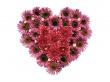 Pink Hyacinths Heart - valentines wallpaper