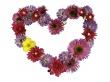 Flowers Heart - valentines wallpaper