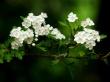 Magic Blossom - spring wallpaper