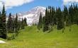 Alpine Grass - scenery wallpaper