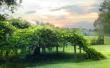 Milkes Vineyard - scenery wallpaper