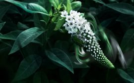 Green insect Wallpaper
