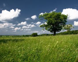 Green field and tree - scenery wallpaper