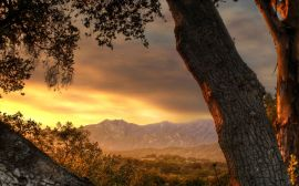Tree and sunset - scenery wallpaper