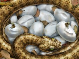 Hatching snakes - reptiles wallpaper