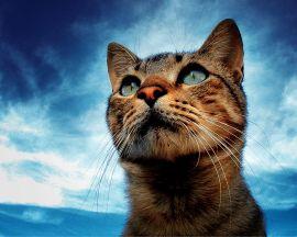 Portrait of a cat - cats wallpaper