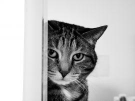 Cat spying - cats wallpaper