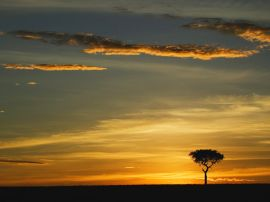 Single Acacia Tree - africa wallpaper