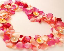 Petals Valentines - valentines wallpaper