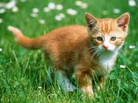 Kitten in the grass - cats wallpaper