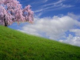 Beautiful day - scenery wallpaper