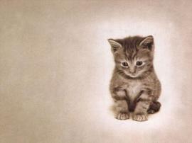 My cat - cats wallpaper