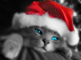 Kitty Santa - cats wallpaper