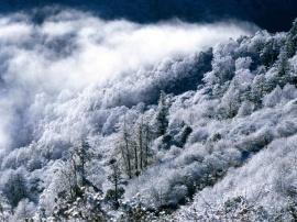 Downtrees - Зима обои