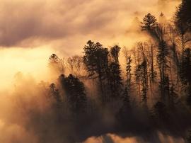 Woodland in Mist - france wallpaper