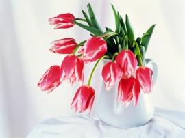 Tulips Bowl Wallpaper